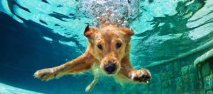 MoxDog Media Solutions - Take the Plunge